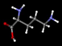 L - ornithine